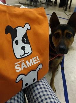 「男朋友」粉絲們熱情分享自家狗狗照片,她說「可愛袋子訴說著臉部平權的中心主旨,袋子中的小狗一隻有黑斑一隻沒有,但他們都一樣可愛,一樣需要人疼愛」